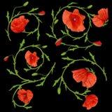 Rote Mohnblumenblumenverzierungs-Elementsammlung auf Schwarzem Stockfoto