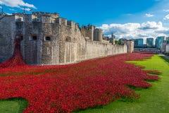 Rote Mohnblumenkunstinstallation am Tower von London, Großbritannien Stockbild
