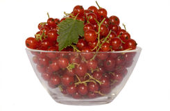 Rote Moosbeeren stockfoto