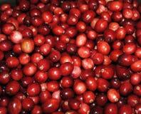 Rote Moosbeeren Stockfotografie