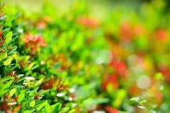 Rote Nadelblumen des Hintergrundes Stockbild