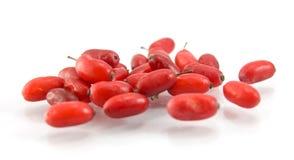 Rote nasse Berberitzenbeere des Hartriegels auf weißem Hintergrund Stockfoto