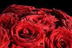 Rote nasse Rosenblumen lokalisiert auf schwarzem Hintergrund Stockfoto
