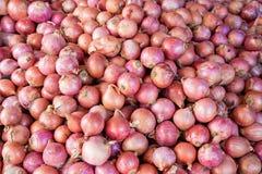 Rote oder purpurrote Zwiebeln stockfotografie