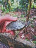 Rote ohrige Schweberschildkröte lizenzfreie stockfotografie