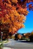 Rote orange Blätter der Fallfarbe, die weg Baum fallen Stockbilder