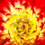 Rote, orange und gelbe Flammenfarbdahlienblume mit gelbem Mitteabschluß herauf Makrofoto lizenzfreies stockfoto