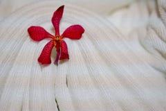 Rote Orchidee auf weißer Decke für Flitterwochen stockbilder