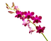 Rote Orchideen. Stockfoto