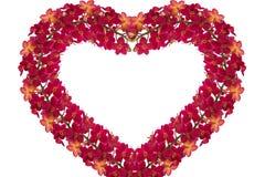 Rote Orchideen Lizenzfreies Stockbild