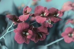 Rote Orchideen im Garten Lizenzfreie Stockfotos
