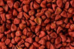 Rote Orlean-Startwerte für Zufallsgenerator (Bixa orellana) Stockbild