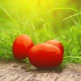 Rote Ostereier im grünen Gras Lizenzfreie Stockbilder