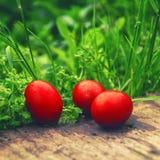 Rote Ostereier im grünen Gras Stockfotografie