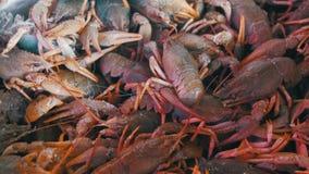Rote Panzerkrebse auf dem Gegenfischmarkt stock footage