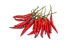 Rote Paprikas Stockfoto