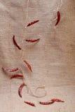 Rote Paprikas gebunden auf grobes Sackzeug backround lizenzfreies stockbild