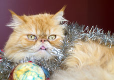 Rote persische Katze mit Weihnachtsball Lizenzfreie Stockfotos