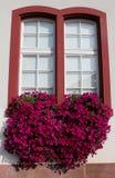 Rote Petunien in einem Fensterblumenkasten Stockbild