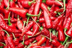 Rote Pfeffer stockbilder