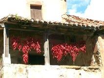 Rote Pfeffer Stockbild