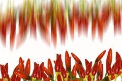 Rote Pfeffer mit weißem Platz Lizenzfreies Stockfoto