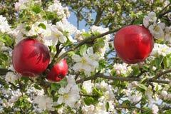 Rote Äpfel im Apfelbaum Stockfotos