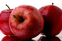 Rote Äpfel mit Wasser-Tropfen Stockfotografie