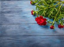 Rote Pfingstrosen auf blauem hölzernem Hintergrund Lizenzfreie Stockfotos