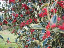 Rote Pflänzchen Kew-Gartens morgens Stockfotografie