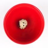 Rote Platte mit Wachtelei Lizenzfreie Stockfotos