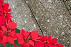 Rote Poinsettia und Schnee stockfotos