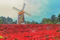 Rote Poinsettia und Windkraftanlage Lizenzfreie Stockfotos