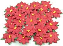 Rote Poinsettia, Weihnachtsblume Stockbilder