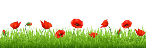 Rote Poppy Border Lizenzfreies Stockfoto
