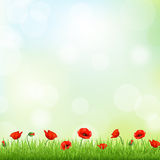 Rote Poppy And Grass Border Lizenzfreies Stockbild