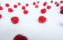 Rote Prunus Avium-Kunsttapete Lizenzfreie Stockfotos