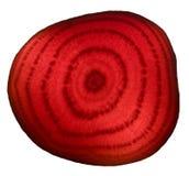 Rote Rübe geschnitzt Lizenzfreies Stockfoto
