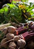 Rote Rüben am Markt des Landwirts Stockbild