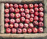 Rote reife Äpfel im Holzrahmen Stockfotografie