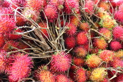 Rote reife bereiten zu den Apfelfrüchten im Bündel vor Lizenzfreie Stockfotos