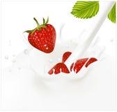 Rote reife Erdbeere, die in das milchige Spritzen fällt Stockfotografie