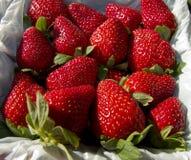 Rote reife Erdbeeren Lizenzfreies Stockbild