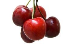 Rote reife Kirschen auf Weiß Stockbilder