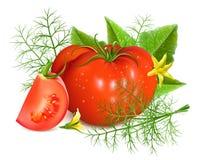 Rote reife Tomaten mit Dill Lizenzfreies Stockbild