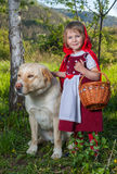 Rote Reithaube und -wolf Lizenzfreie Stockfotos