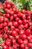 Rote Rettiche auf Anzeige am Markt Stockbild