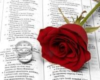 Rote Rosa Stockbilder