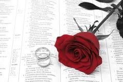 Rote Rosa Lizenzfreies Stockfoto