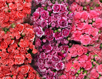 Rote rosa und purpurrote Blume, Blumenstraußhintergrund Lizenzfreie Stockfotografie